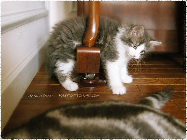 ピアノの下で遊ぶ子猫 どういう状況!?