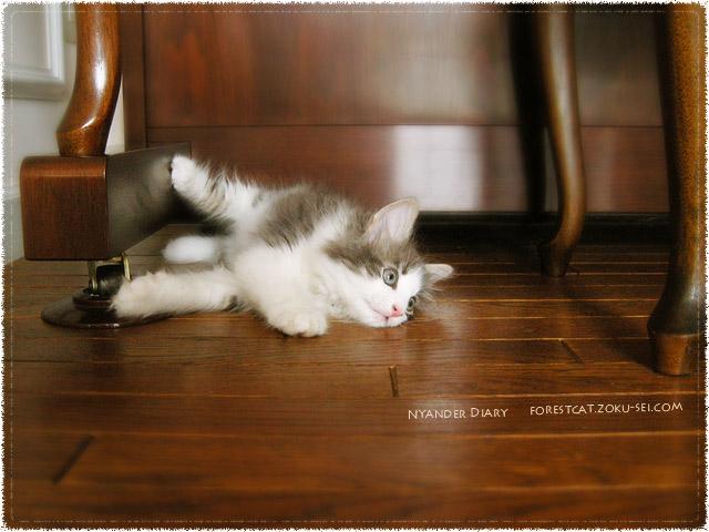 ピアノの下でごーろごろな子猫