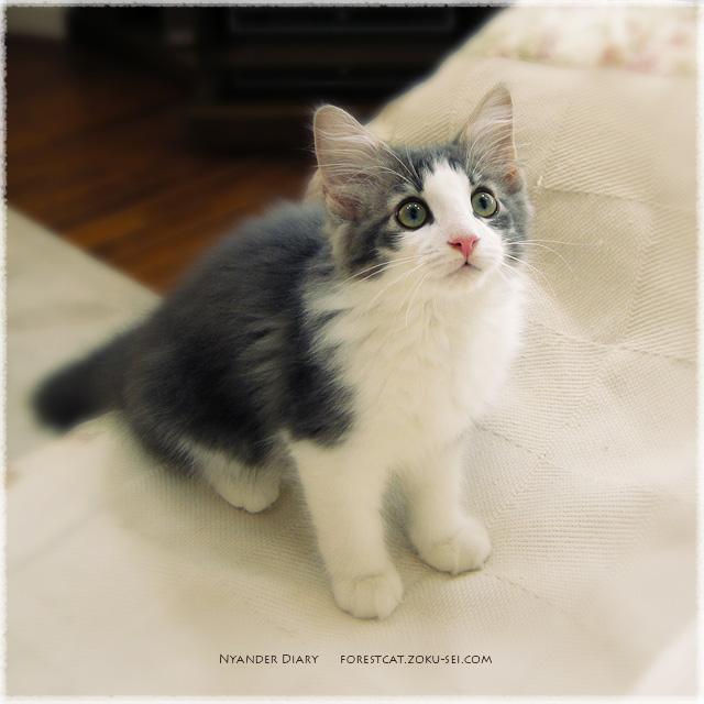 2010年08月30日のよなちゃん_01 完璧なお座りポーズの子猫