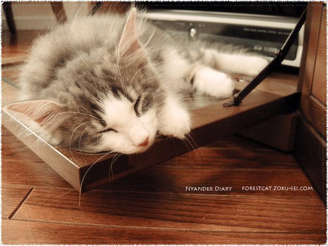 ウッドデッキで眠る子猫