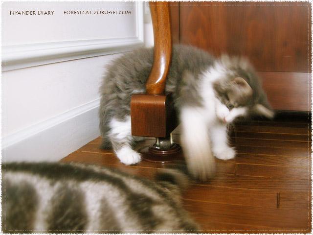 どんな状況でもじゃれることを忘れない子猫