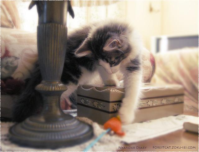 ねずみと子猫 ノルウェージャンフォレストキャット