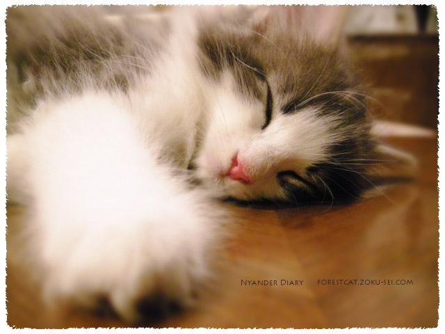 すやすや眠る子猫の手と顔