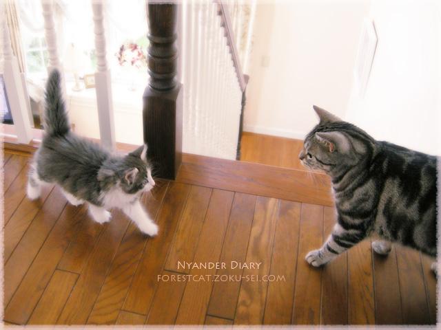 猫と猫の出会い